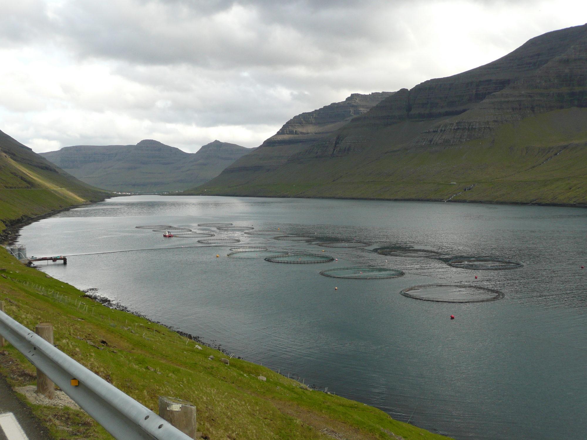 Farma łososi na Wyspach Owczych