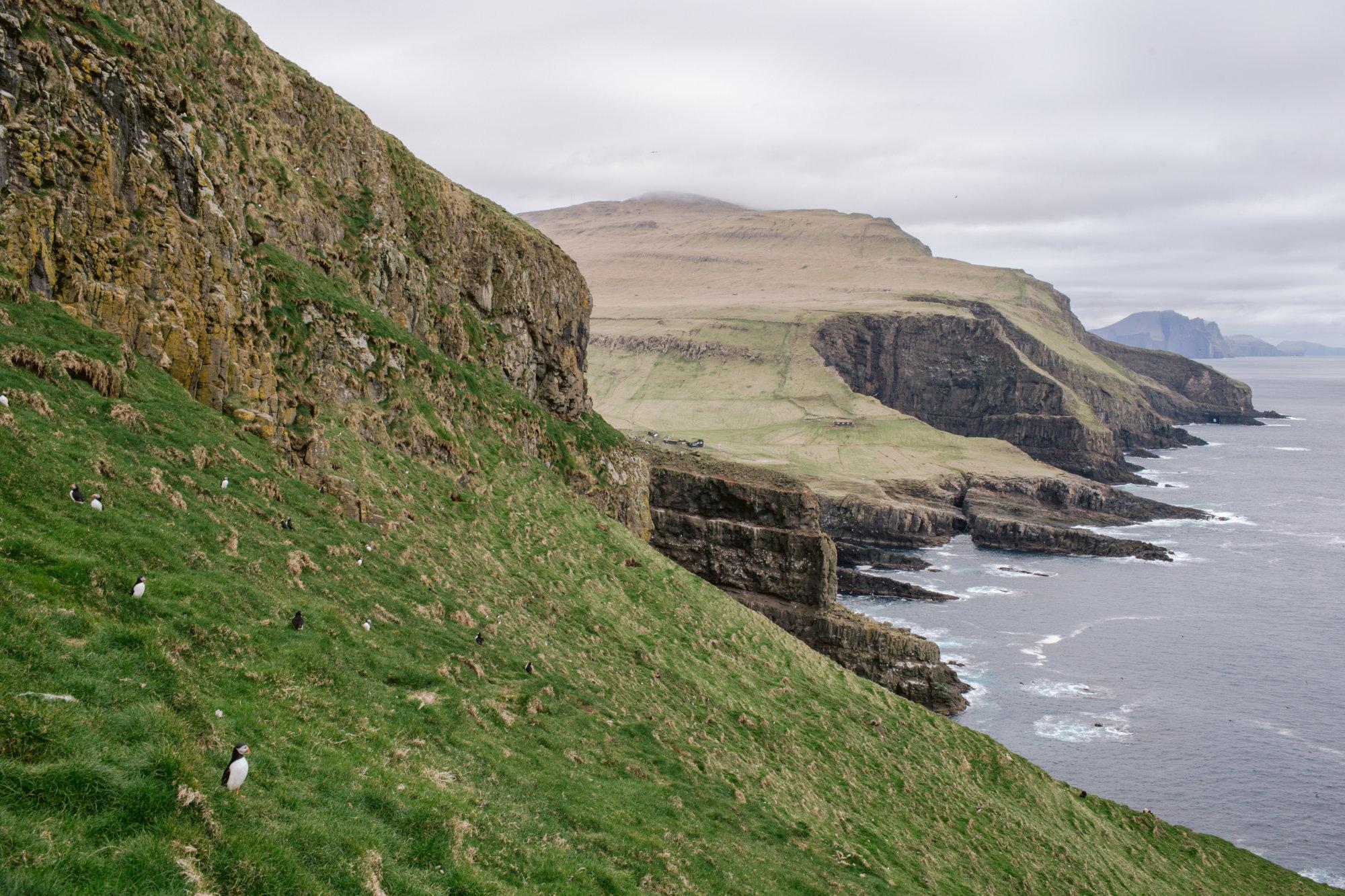 Dolina Maskonurów na Mykines na Wyspach Owczych